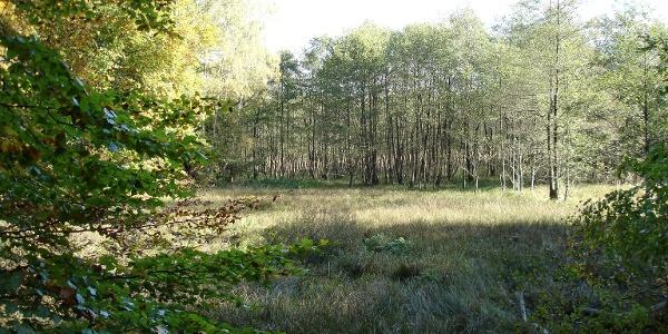 Auf einem Naturlehrpfad durch den Wald informieren Tafeln über die heimische Flora und Fauna.
