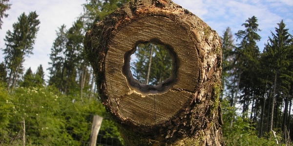 Guckrohr am KlimaErlebnisWeg Dalheim zeigt deb Eunfluss des Wetters auf die Bäume
