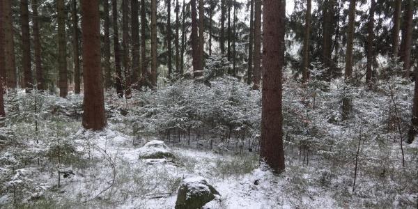 Waldwege zwischen Tännesberg und Wildenstein