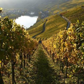 Aussicht auf Weinberge im Herbst