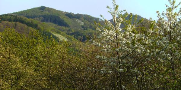Aussichtspunkt Nonnenstromberg