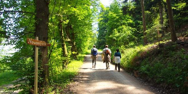 Wanderung durch den Schwazwald