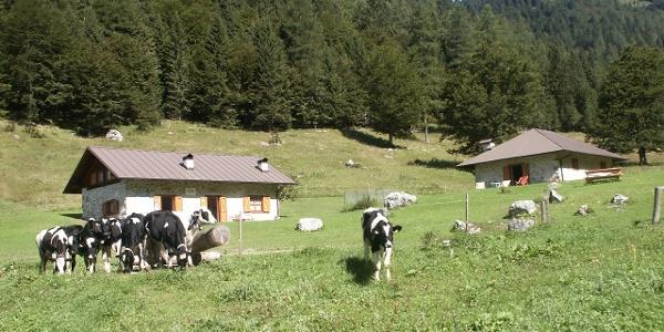Malga Nambi - Parco Naturale Adamello Brenta