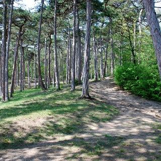 Waldteil im Kurpark Bad Vöslau