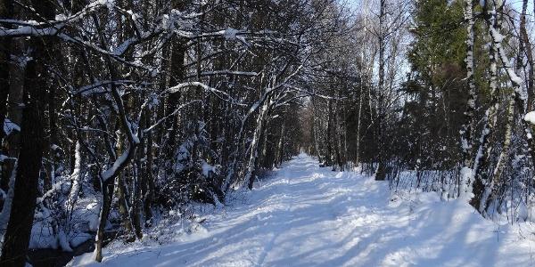 Winterwandern in der Kendlühlfilze