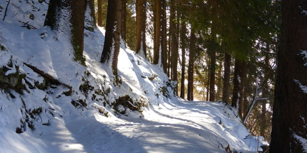 Kilknerwald