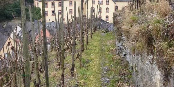 Weinbergspfad bei Bernkastel