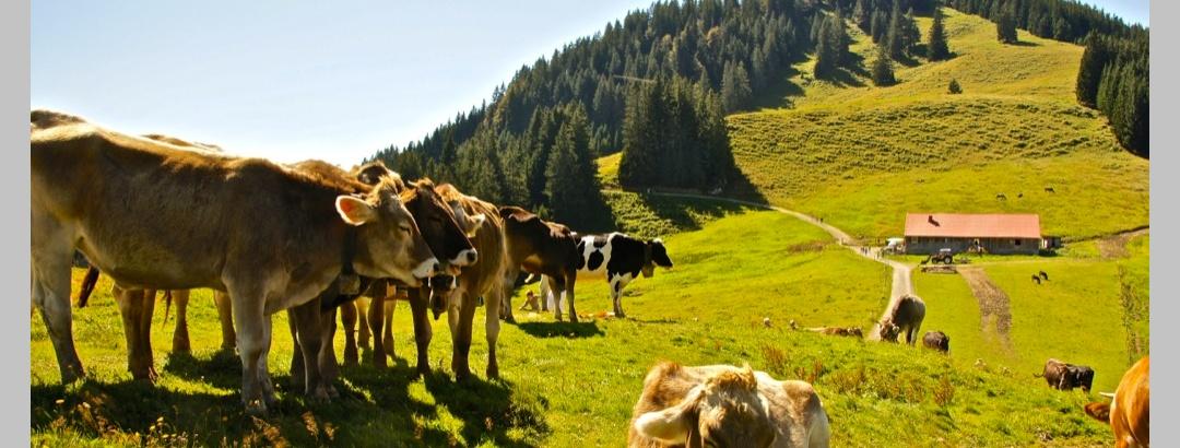 Fahnengehren Alpe mit Sigiswanger Horn