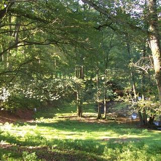 Walldürn - wildromantische Landschaft