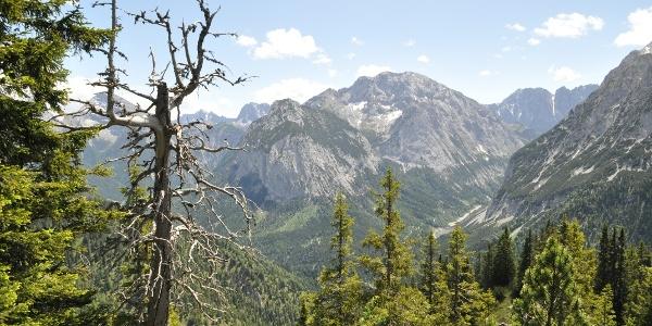 Durch wilden Bergwald mit dem Karwendelmassiv (hier die Falkengruppe und Lalidererwände) im Rücken steigt man auf.