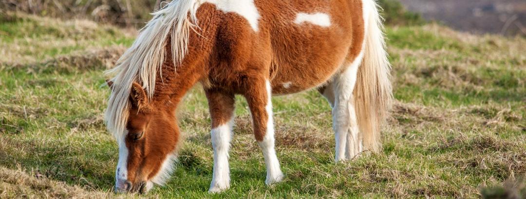 Pferdetouren