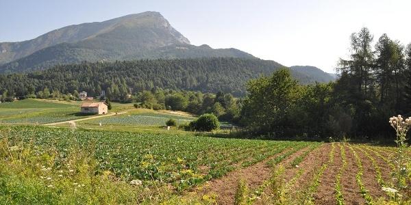 Monte Creino - Val di Gresta