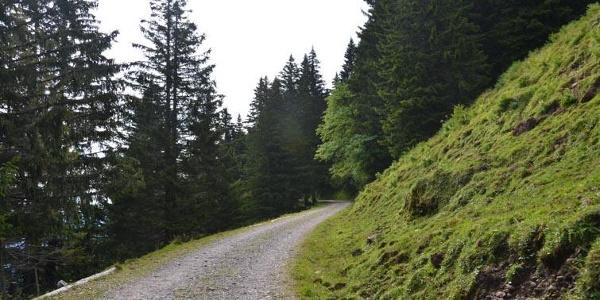 Der Wanderweg verläuft auf der Alpstrasse.