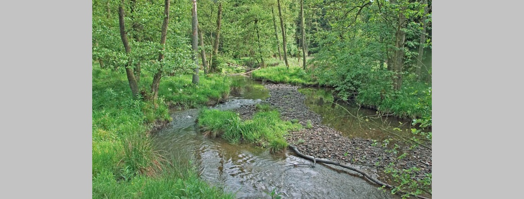 Arnsberger Wald, Heve