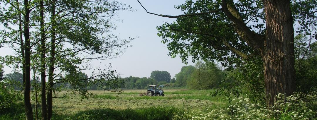 Ländliche Idylle im Erholungsgebiet Thülsfelder Talsperre