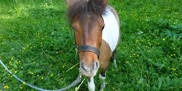 Pony auf dem Weg ins Krebsbachtal