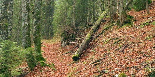 Im Wald beim Hasental
