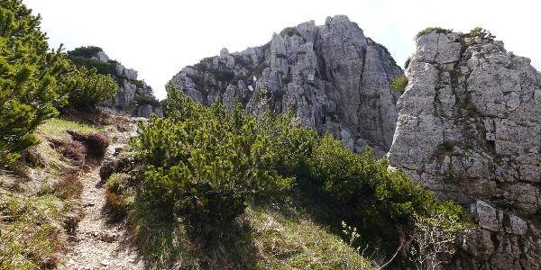 Der Steig besteht hauptsächlich aus steilem Gehgelände