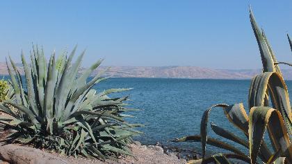 חוף הכנרת לצד כפר נחום