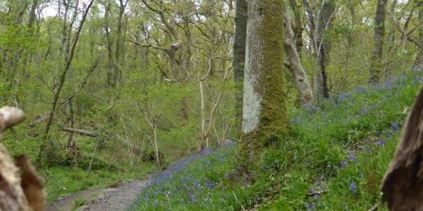 Pfad durch den Amair Wood