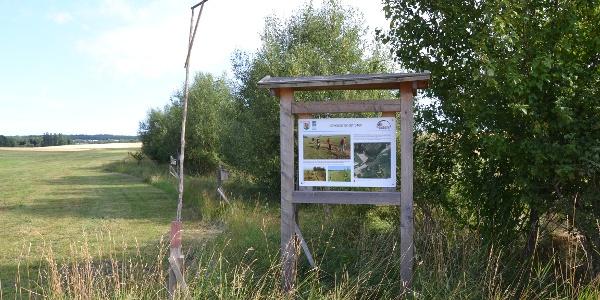 Gehölzesaum am Drainagegraben Biotop