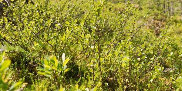 Einzigartige Flora im Naturschutzgebiet Toteisboden