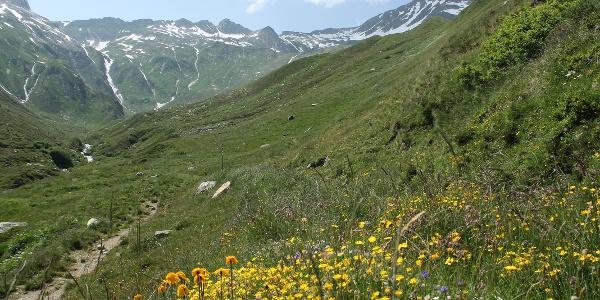 Aufstieg durch Blumenwiesen