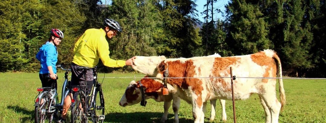 Radfahren in der Gegend um den Sylvensteinsee