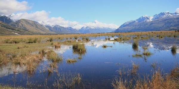 Blick über das Mackenzie Country zum Mount Cook