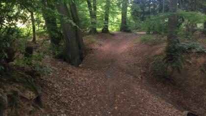 """""""Trail"""" Feeling im Wald"""