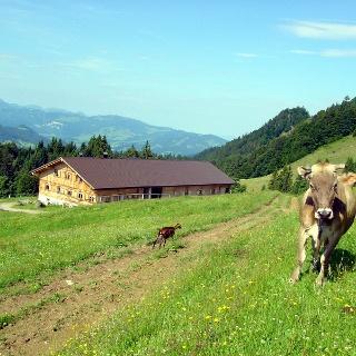 Schwarzenberger Plattenalpe Lecknertal