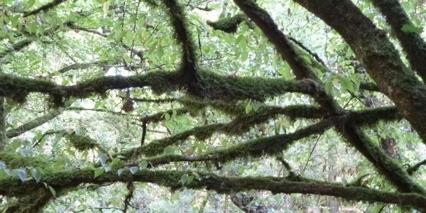 Moose und Flechten im Helterbachtal