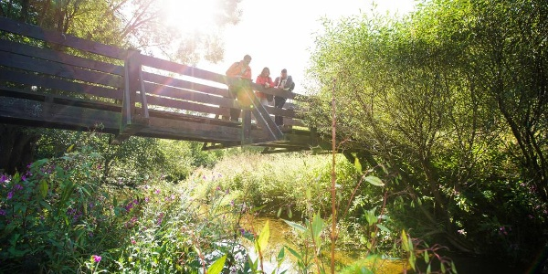 Brücke über den Hahnenbach