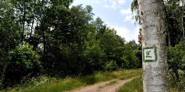 Lutherweg Sachsen Gesamte Strecke Wanderung Outdooractive Com