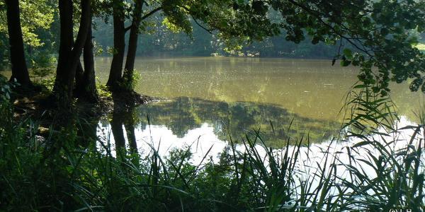 Manhagen-Teich