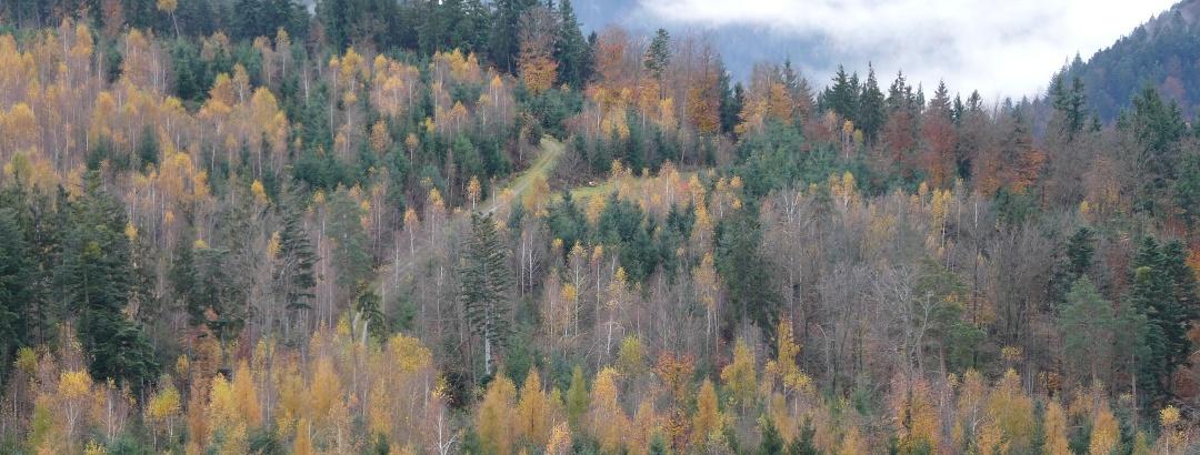 Blick über den Herbstwald bei der NaTour im Klebwald