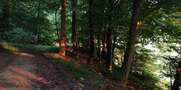 Im Ritterholz