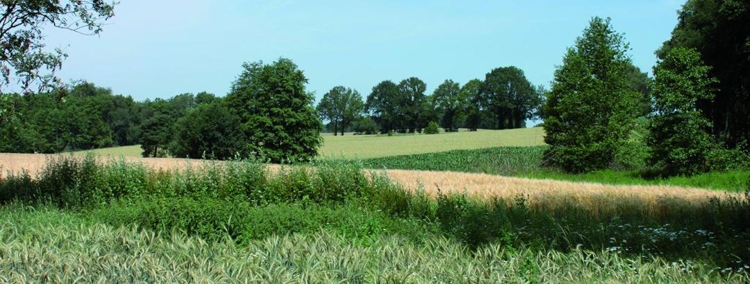 Landschaft um Klein Bokern