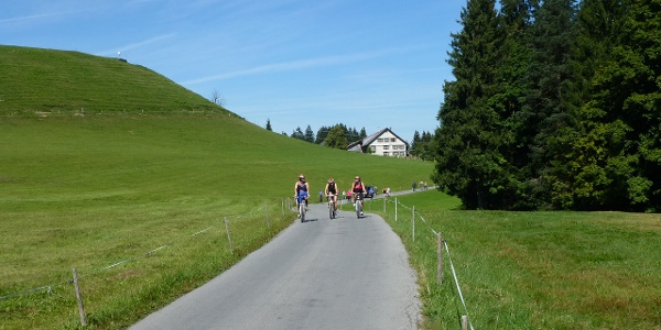 Radweg vom Pfänder in Richtung Jungholz