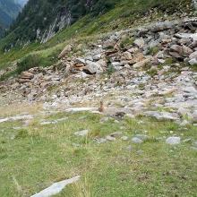 Murmeltiere in Sicht und wieder mehr Grün beim nahen Folgen des Bachlaufs