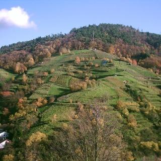 Der Engelsberg in Bühlertal gehört zu den steilsten Weinberglagen in Europa.
