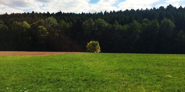 Bannwiesen