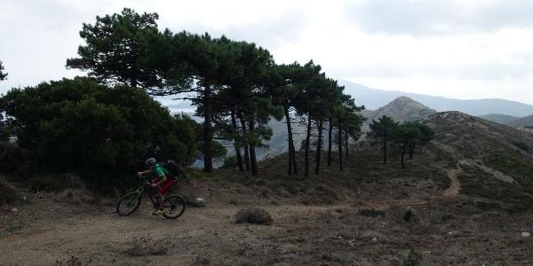 Blick auf den Trail vom Cima del Monte, hier bei der Auffahrt