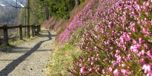 Bahnwanderweg im Frühling