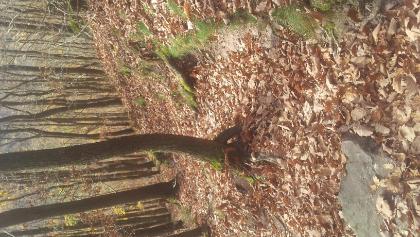 Teilstück Josef-Schramm-Weg. Der Pfad war vor lauter Laub kaum zu erkennen.