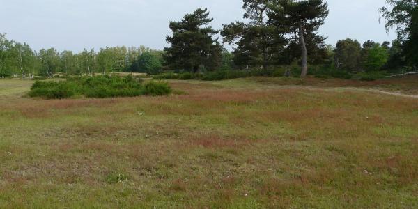 Die offene Sandrasen-Vegetation auf dem Puységur-Gelände bei Sandweier