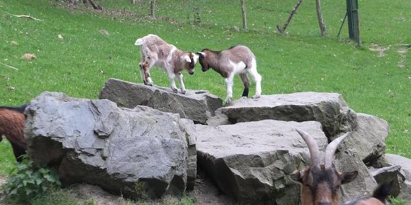 Wildpark Karlsbrunn