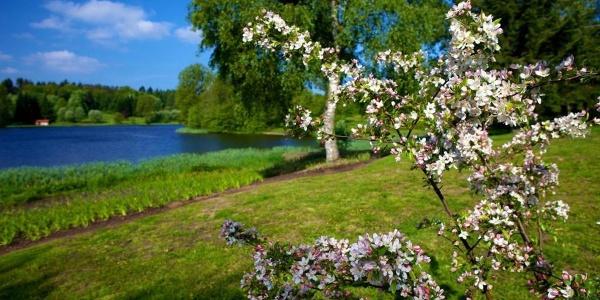Blüten im Frühling