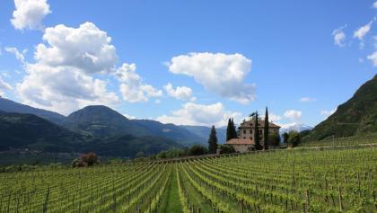 Northern Wine & Bike Route: Lagrein and Sauvignon
