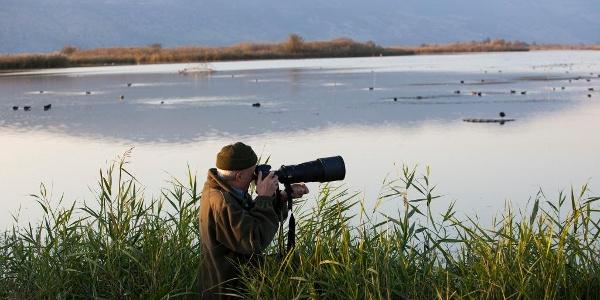 Wasservögel beobachten im Hula Valley in Galiläa